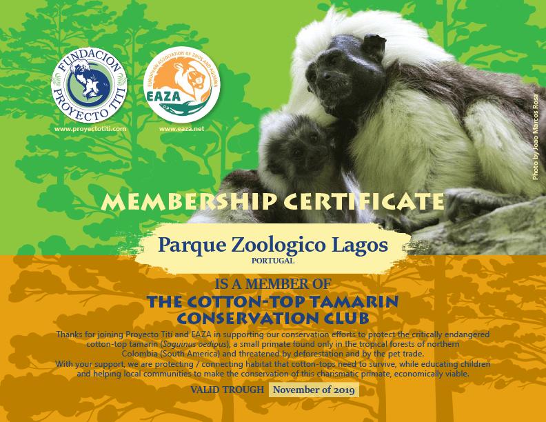 Cotton-Top Tamarin Certificate EAZA Proyecto Titi